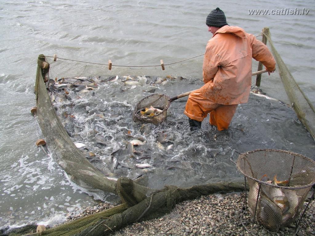 какой рыба можно выращивать в таджикистане ЮЗАО пр-д