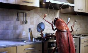 Добрые тараканы