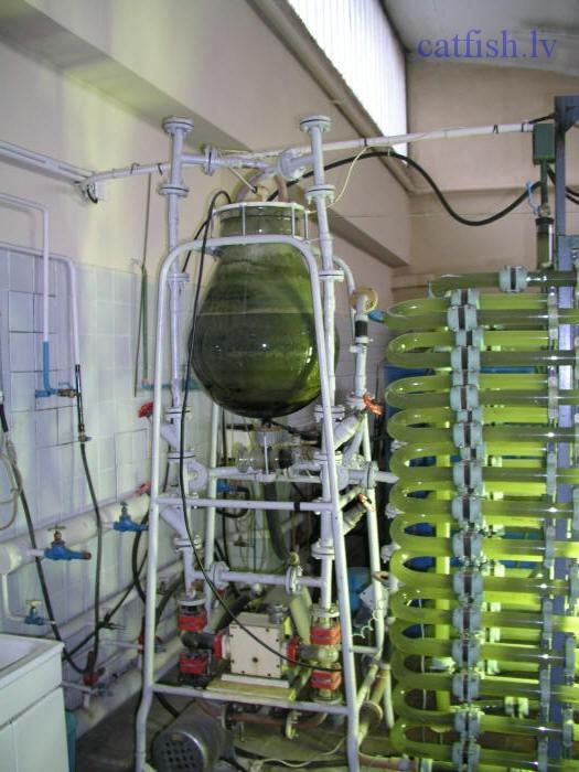 Реакторы для выращивания водорослей 35