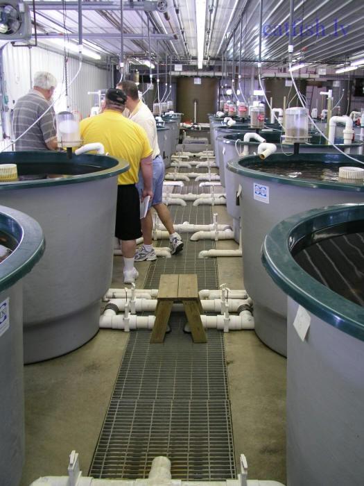 Выращивание рыбы в условиях замкнутого водоснабжения 66
