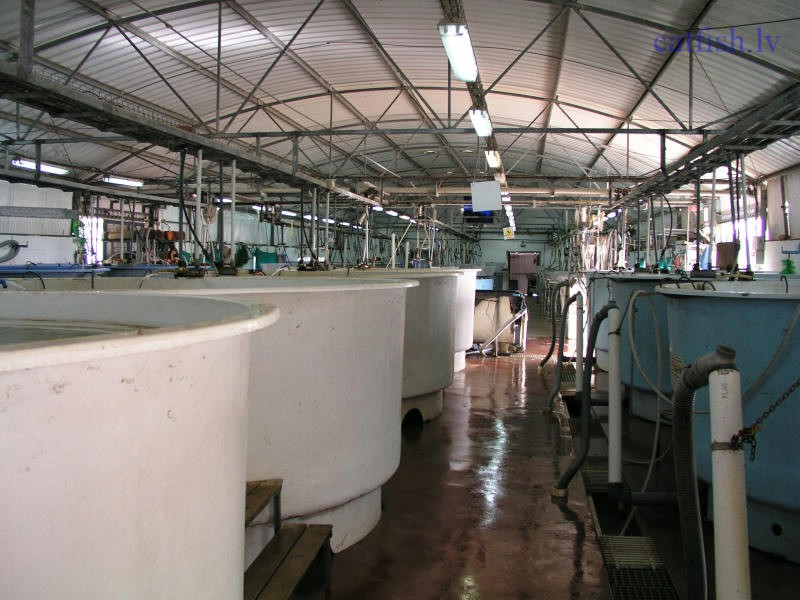 Recirculation aquaculture system (RAS)